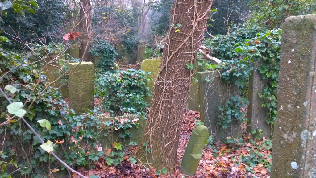 A smaller part of the cemetery has been reclaimed by woods, including huge holly bushes. Here you see the edges....